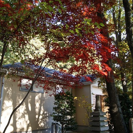 納骨堂前の紅葉